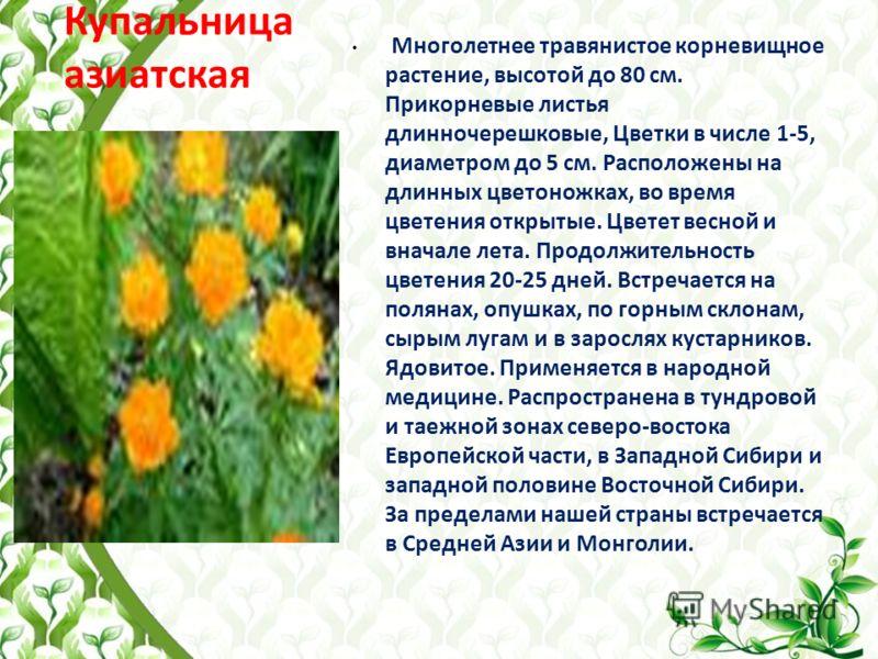 Купальница азиатская Многолетнее травянистое корневищное растение, высотой до 80 см. Прикорневые листья длинночерешковые, Цветки в числе 1-5, диаметром до 5 см. Расположены на длинных цветоножках, во время цветения открытые. Цветет весной и вначале л