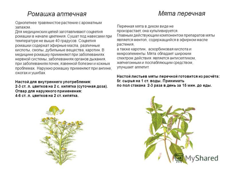 Ромашка аптечная Однолетнее травянистое растение с ароматным запахом. Для медицинских целей заготавливают соцветия ромашки в начале цветения. Сушат под навесами при температуре не выше 40 градусов. Соцветия ромашки содержат эфирные масла, различные к