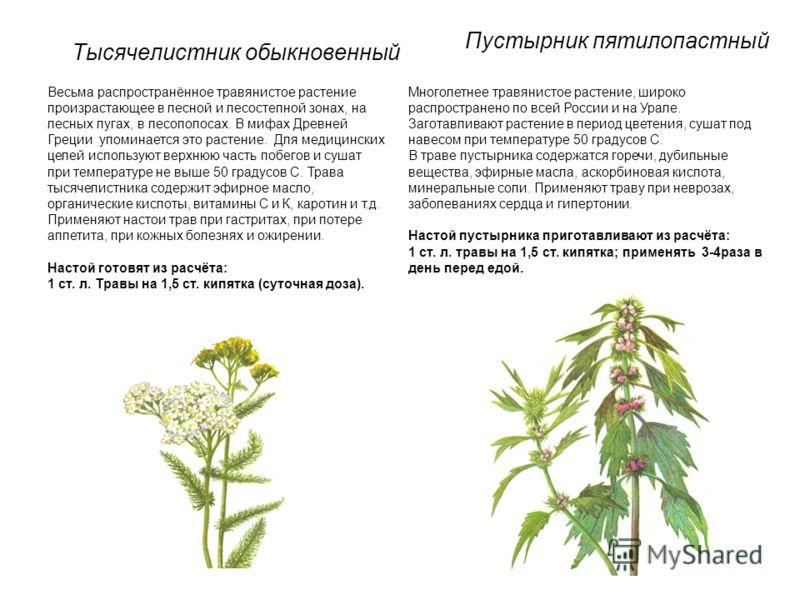 Тысячелистник обыкновенный Весьма распространённое травянистое растение произрастающее в лесной и лесостепной зонах, на лесных лугах, в лесополосах. В мифах Древней Греции упоминается это растение. Для медицинских целей используют верхнюю часть побег