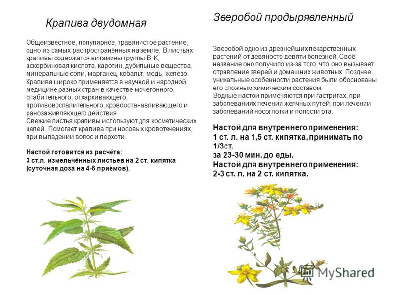 Крапива двудомная Общеизвестное, популярное, травянистое растение, одно из самых распространённых на земле. В листьях крапивы содержатся витамины группы В, К, аскорбиновая кислота, каротин, дубильные вещества, минеральные соли, марганец, кобальт, мед