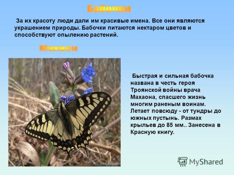 За их красоту люди дали им красивые имена. Все они являются украшением природы. Бабочки питаются нектаром цветов и способствуют опылению растений. Быстрая и сильная бабочка названа в честь героя Троянской войны врача Махаона, спасшего жизнь многим ра