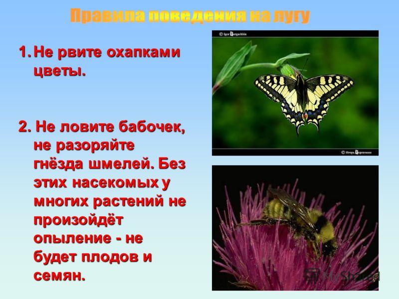 1.Не рвите охапками цветы. 2. Не ловите бабочек, не разоряйте гнёзда шмелей. Без этих насекомых у многих растений не произойдёт опыление - не будет плодов и семян.