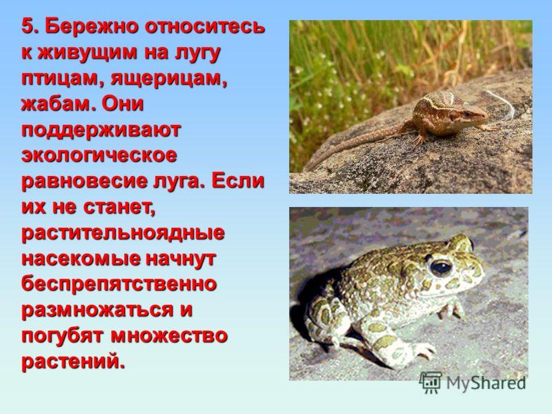 5. Бережно относитесь к живущим на лугу птицам, ящерицам, жабам. Они поддерживают экологическое равновесие луга. Если их не станет, растительноядные насекомые начнут беспрепятственно размножаться и погубят множество растений.