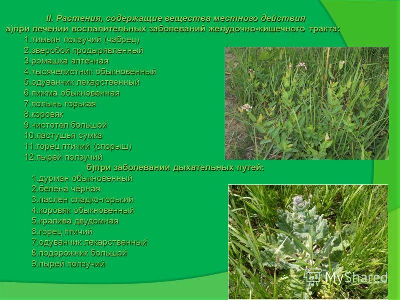 II. Растения, содержащие вещества местного действия а)при лечении воспалительных заболеваний желудочно-кишечного тракта: 1.тимьян ползучий (чабрец) 2.зверобой продырявленный 3.ромашка аптечная 4.тысячелистник обыкновенный 5.одуванчик лекарственный 6.