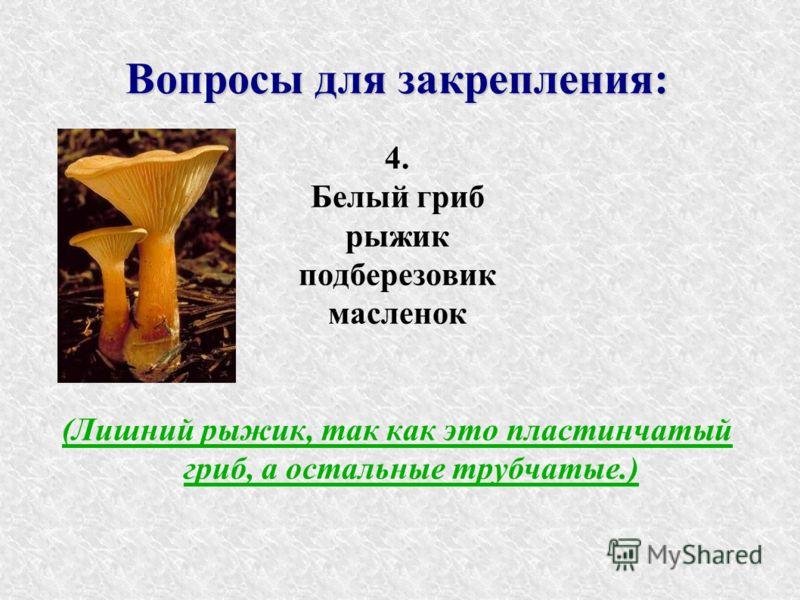 Вопросы для закрепления: 4. Белый гриб рыжик подберезовик масленок (Лишний рыжик, так как это пластинчатый гриб, а остальные трубчатые.)