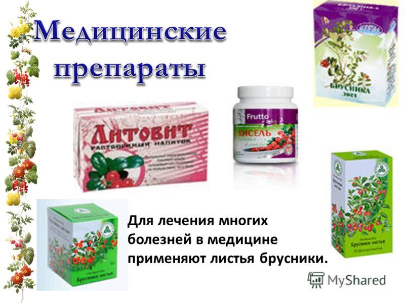 Для лечения многих болезней в медицине применяют листья брусники.