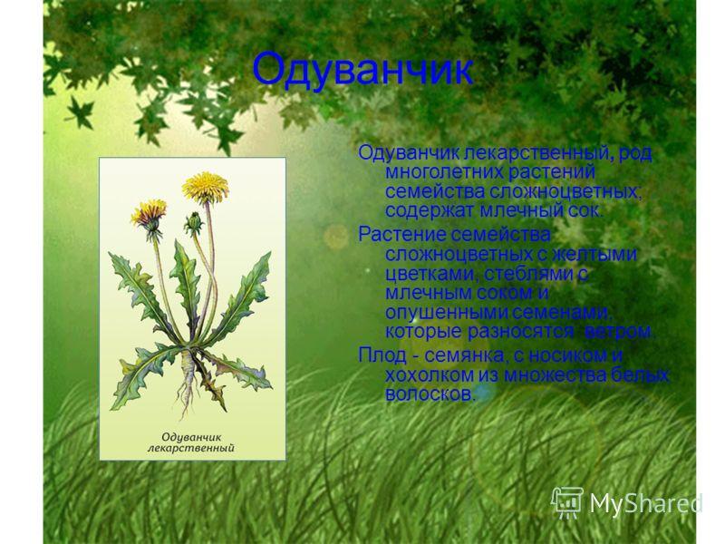 Одуванчик лекарственный, род многолетних растений семейства сложноцветных; содержат млечный сок. Растение семейства сложноцветных с желтыми цветками, стеблями с млечным соком и опушенными семенами, которые разносятся ветром. Плод - семянка, с носиком