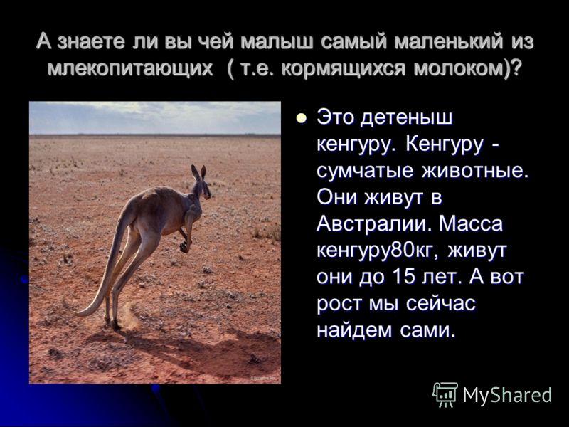 А знаете ли вы чей малыш самый маленький из млекопитающих ( т.е. кормящихся молоком)? Это детеныш кенгуру. Кенгуру - сумчатые животные. Они живут в Австралии. Масса кенгуру80кг, живут они до 15 лет. А вот рост мы сейчас найдем сами. Это детеныш кенгу