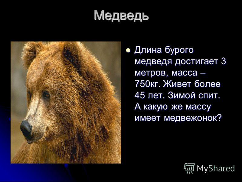 Медведь Длина бурого медведя достигает 3 метров, масса – 750кг. Живет более 45 лет. Зимой спит. А какую же массу имеет медвежонок? Длина бурого медведя достигает 3 метров, масса – 750кг. Живет более 45 лет. Зимой спит. А какую же массу имеет медвежон