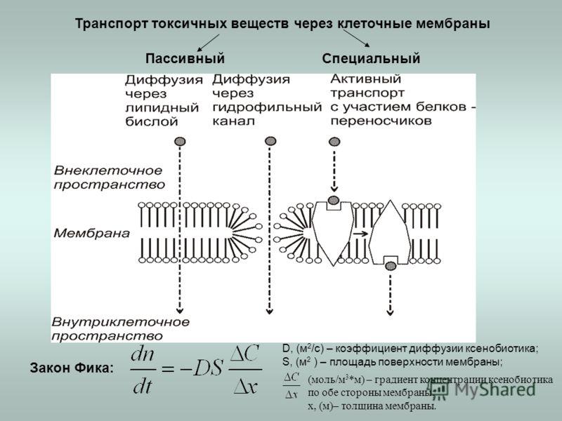 Закон Фика: D, (м 2 /с) – коэффициент диффузии ксенобиотика; S, (м 2 ) – площадь поверхности мембраны; (моль/м 3 *м) – градиент концентрации ксенобиотика по обе стороны мембраны; x, (м)– толщина мембраны. Транспорт токсичных веществ через клеточные м