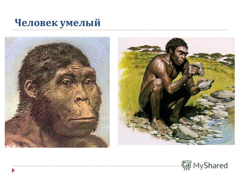 Природа человека обществознание 10