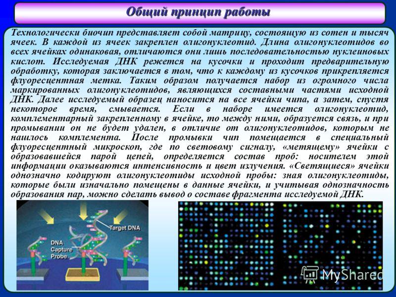 Общий принцип работы Технологически биочип представляет собой матрицу, состоящую из сотен и тысяч ячеек. В каждой из ячеек закреплен олигонуклеотид. Длина олигонуклеотидов во всех ячейках одинаковая, отличаются они лишь последовательностью нуклеиновы