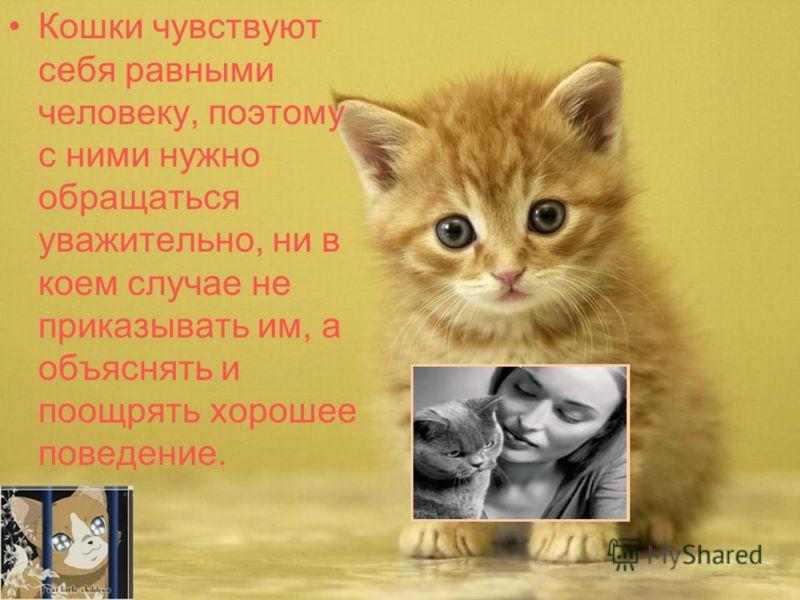 Кошки чувствуют себя равными человеку, поэтому с ними нужно обращаться уважительно, ни в коем случае не приказывать им, а объяснять и поощрять хорошее поведение.