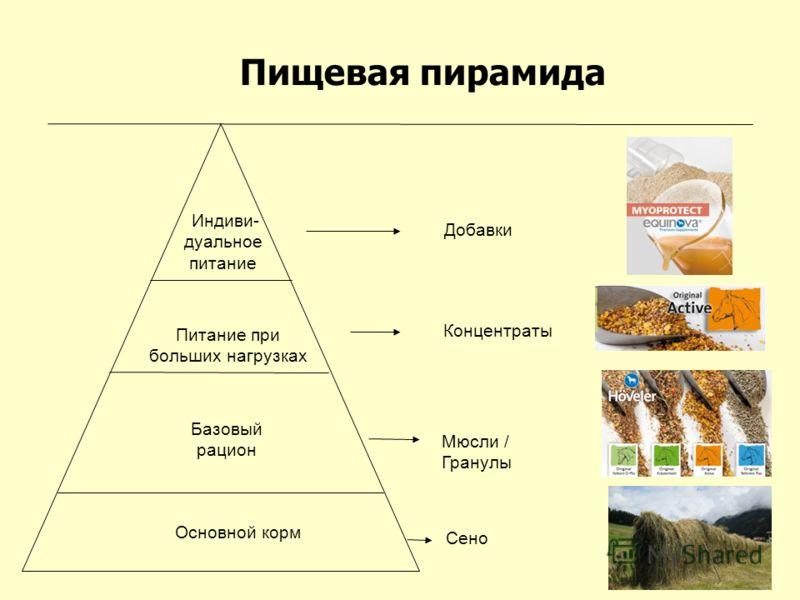 Пищевая пирамида Индиви- дуальное питание Питание при больших нагрузках Базовый рацион Основной корм Сено Мюсли / Гранулы Концентраты Добавки