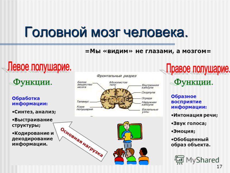 17 Головной мозг человека. =Мы «видим» не глазами, а мозгом= Обработка информации: Синтез, анализ; Выстраивание структуры; Кодирование и декодирование информации. Образное восприятие информации: Интонация речи; Звук голоса; Эмоция; Обобщенный образ о