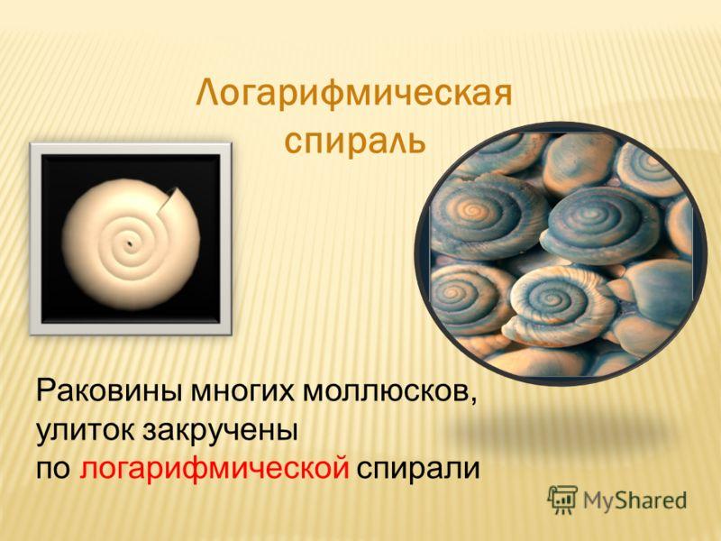 Великий немецкий поэт Иоганн-Вольфганг Гёте считал логарифмическую спираль математическим символом жизни и духовного развития Логарифмическая спираль