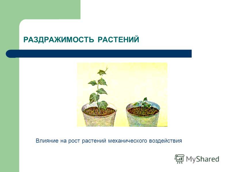 РАЗДРАЖИМОСТЬ РАСТЕНИЙ Влияние на рост растений механического воздействия
