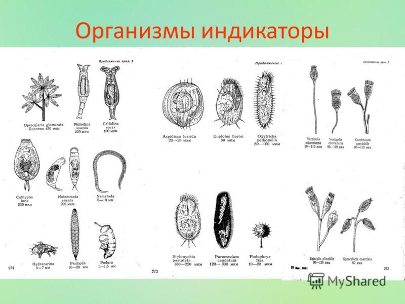 Организмы индикаторы