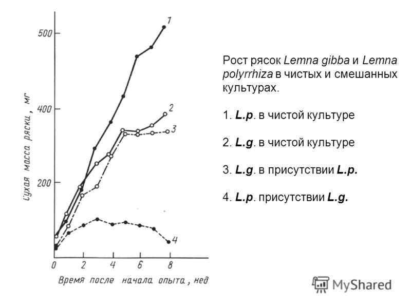 Рост рясок Lemna gibba и Lemna polyrrhiza в чистых и смешанных культурах. 1. L.p. в чистой культуре 2. L.g. в чистой культуре 3. L.g. в присутствии L.p. 4. L.p. присутствии L.g.