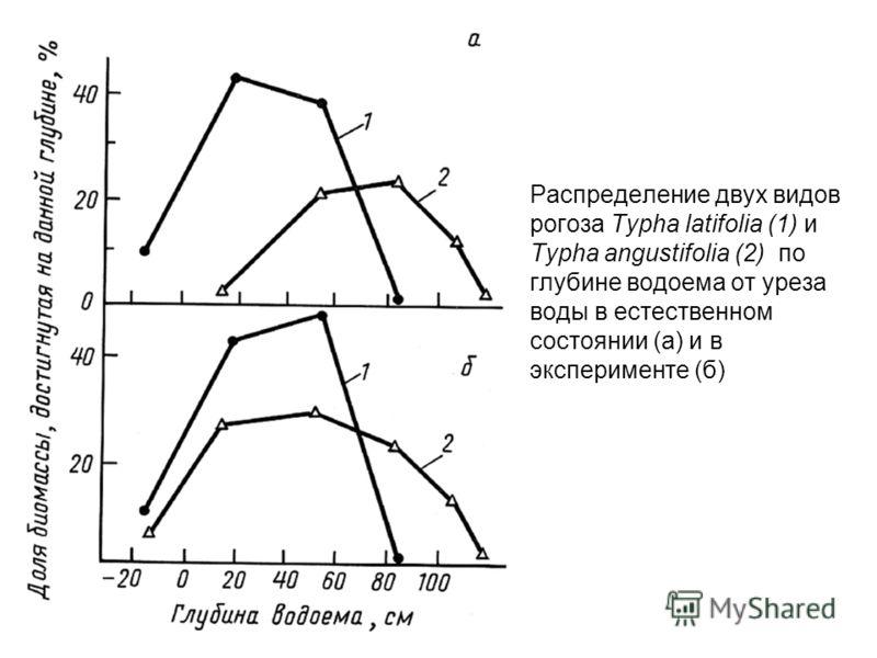 Распределение двух видов рогоза Typha latifolia (1) и Typha angustifolia (2) по глубине водоема от уреза воды в естественном состоянии (а) и в эксперименте (б)