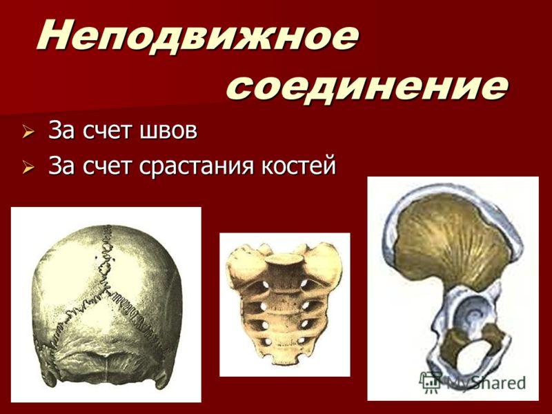 Неподвижное соединение За счет швов За счет швов За счет срастания костей За счет срастания костей