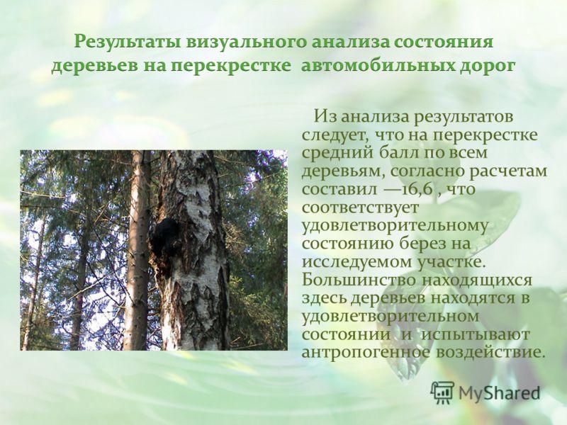 Из анализа результатов следует, что на перекрестке средний балл по всем деревьям, согласно расчетам составил 16,6, что соответствует удовлетворительному состоянию берез на исследуемом участке. Большинство находящихся здесь деревьев находятся в удовле