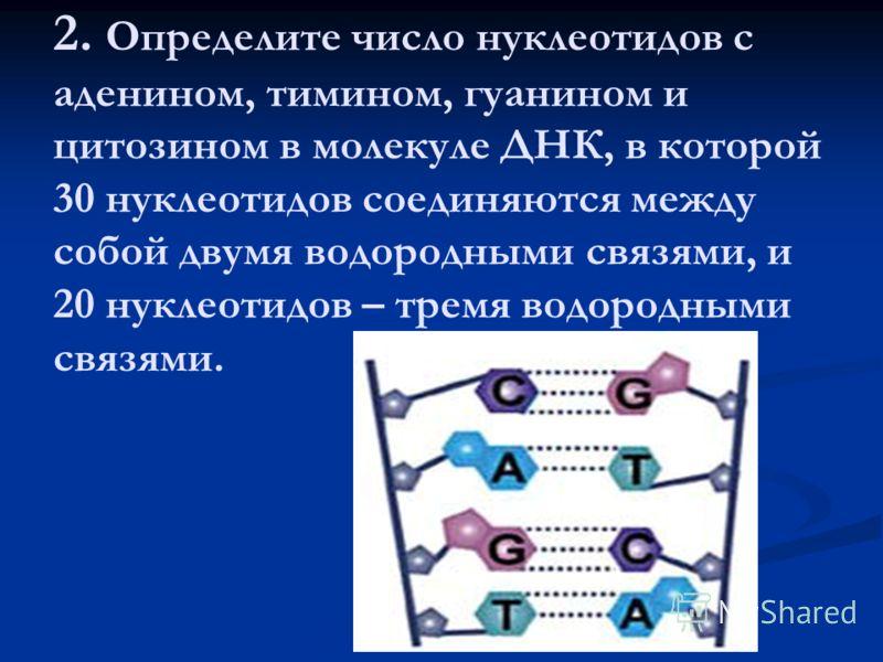 2. Определите число нуклеотидов с аденином, тимином, гуанином и цитозином в молекуле ДНК, в которой 30 нуклеотидов соединяются между собой двумя водородными связями, и 20 нуклеотидов – тремя водородными связями.