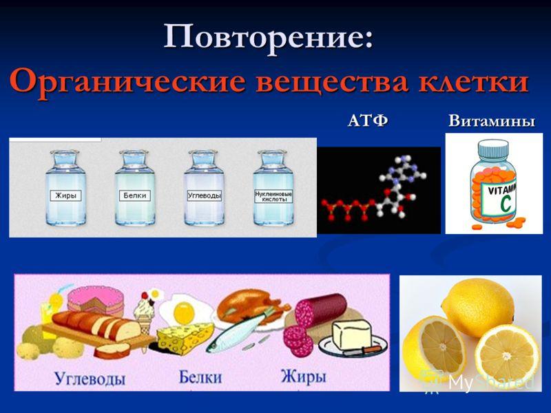 Повторение: Органические вещества клетки АТФ Витамины АТФ Витамины