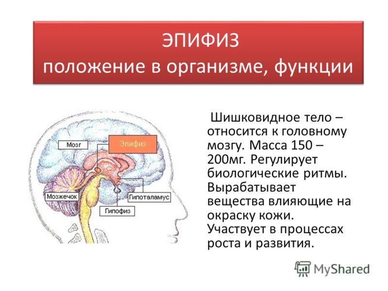 Тело Шишковидное фото