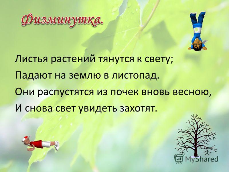 Листья растений тянутся к свету; Падают на землю в листопад. Они распустятся из почек вновь весною, И снова свет увидеть захотят.