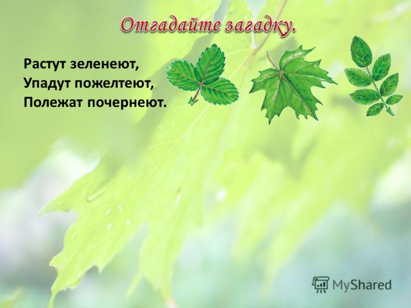 Растут зеленеют, Упадут пожелтеют, Полежат почернеют.