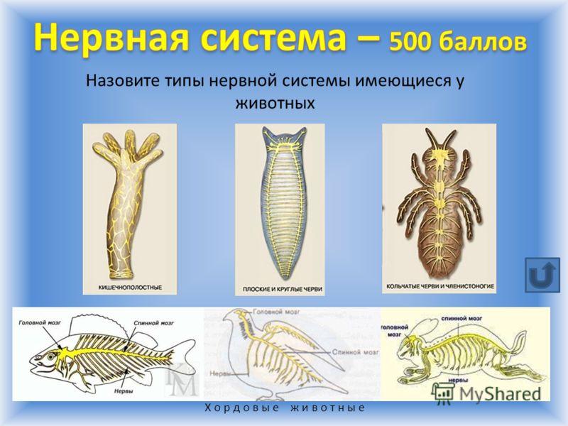Х о р д о в ы е ж и в о т н ы е Назовите типы нервной системы имеющиеся у животных