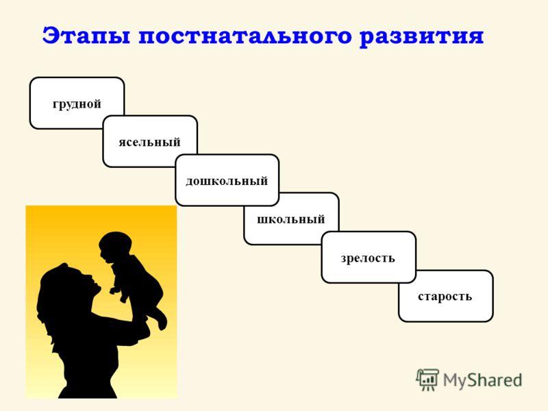 грудной ясельный старость школьный дошкольный зрелость Этапы постнатального развития