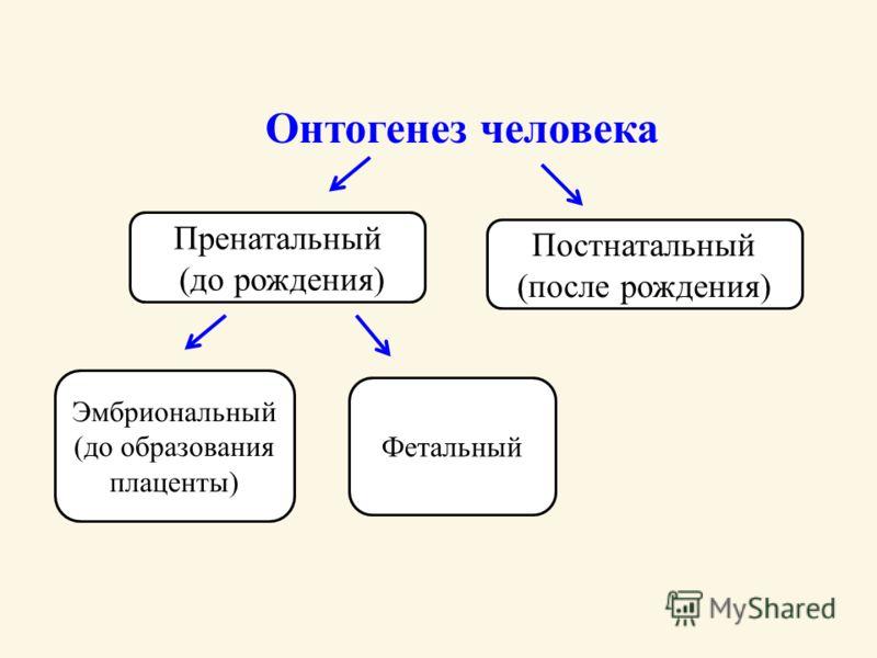 Онтогенез человека Пренатальный (до рождения) Эмбриональный (до образования плаценты) Фетальный Постнатальный (после рождения)