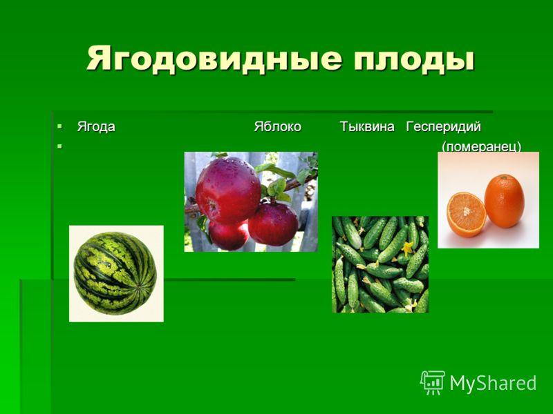 Ягодовидные плоды Ягода Яблоко Тыквина Гесперидий Ягода Яблоко Тыквина Гесперидий (померанец) (померанец)
