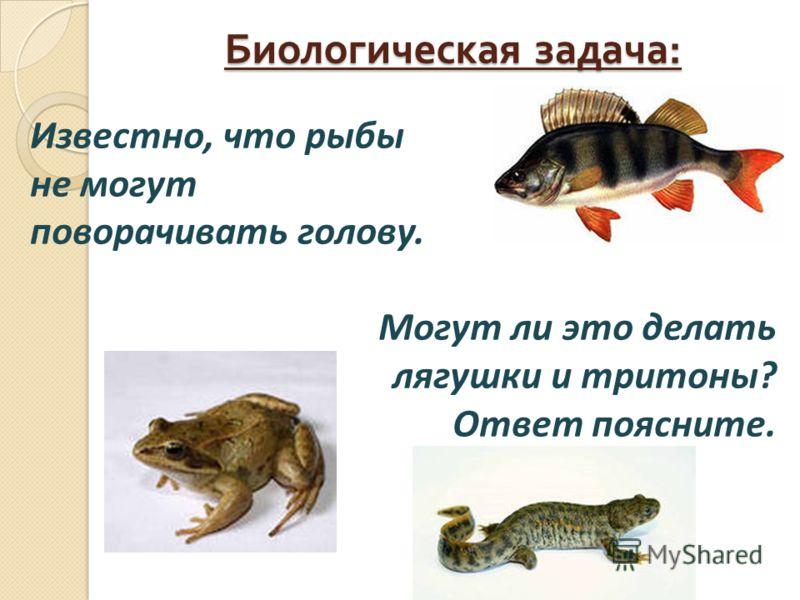 Биологическая задача : Известно, что рыбы не могут поворачивать голову. Могут ли это делать лягушки и тритоны? Ответ поясните.