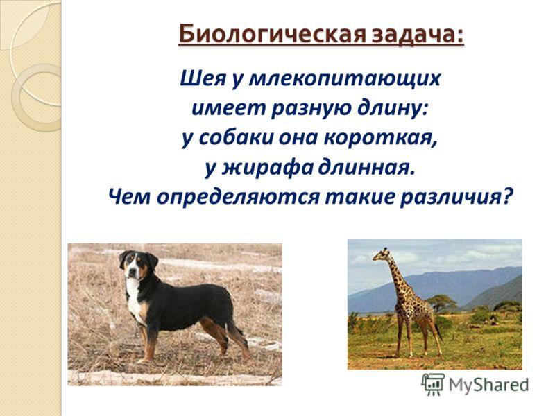 Биологическая задача : Шея у млекопитающих имеет разную длину: у собаки она короткая, у жирафа длинная. Чем определяются такие различия?