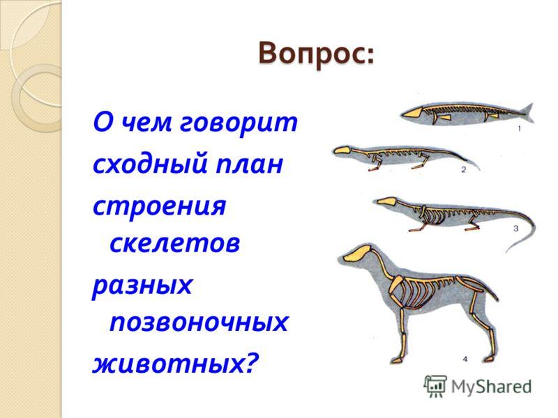 Вопрос : О чем говорит сходный план строения скелетов разных позвоночных животных ?