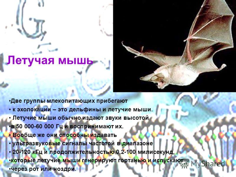 Летучая мышь Две группы