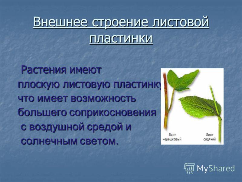 Внешнее строение листовой пластинки Растения имеют Растения имеют плоскую листовую пластинку, что имеет возможность большего соприкосновения с воздушной средой и с воздушной средой и солнечным светом. солнечным светом.