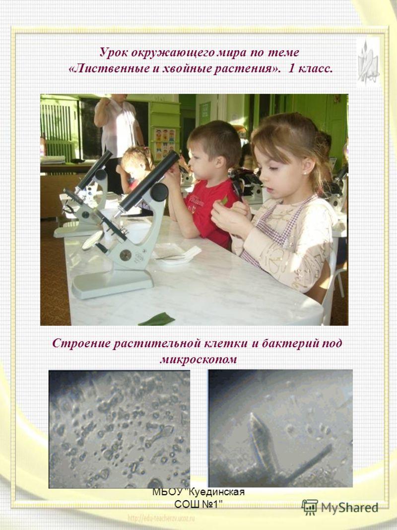 МБОУ Куединская СОШ 1 Урок окружающего мира по теме «Лиственные и хвойные растения». 1 класс. Строение растительной клетки и бактерий под микроскопом