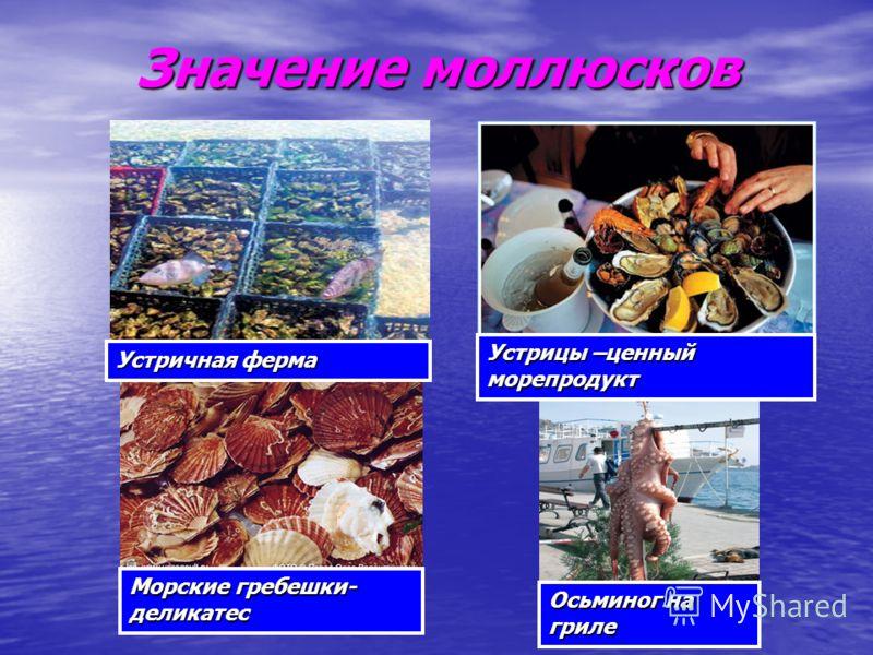 Значение моллюсков Устричная ферма Морские гребешки- деликатес Устрицы –ценный морепродукт Осьминог на гриле