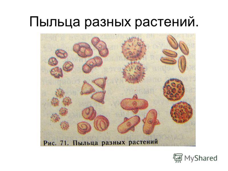Пыльца разных растений.