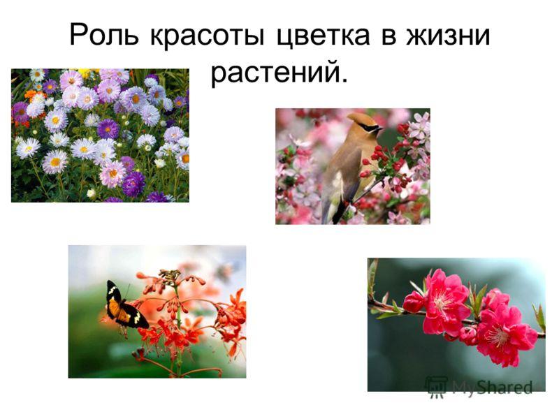 Роль красоты цветка в жизни растений.