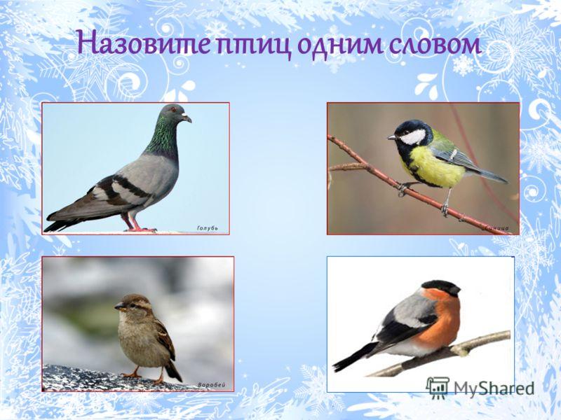 Назовите птиц одним словом