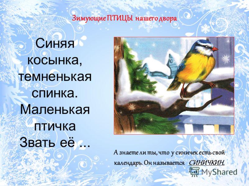 Зимующие ПТИЦЫ нашего двора Синяя косынка, темненькая спинка. Маленькая птичка Звать её... А знаете ли ты, что у синичек есть свой календарь. Он называется СИНИЧКИН.
