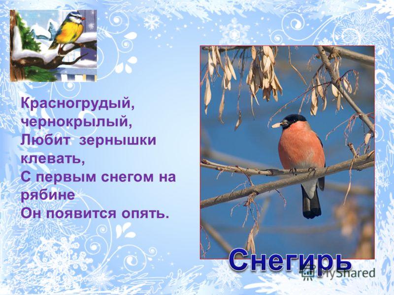 Красногрудый, чернокрылый, Любит зернышки клевать, С первым снегом на рябине Он появится опять.