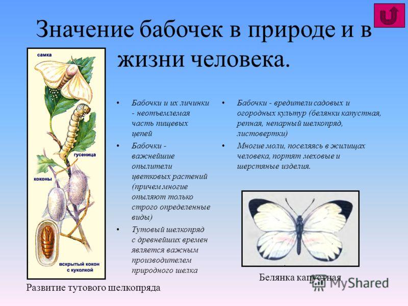 Значение бабочек в природе и в жизни человека. Бабочки и их личинки - неотъемлемая часть пищевых цепей Бабочки - важнейшие опылители цветковых растений (причем многие опыляют только строго определенные виды) Тутовый шелкопряд с древнейших времен явля