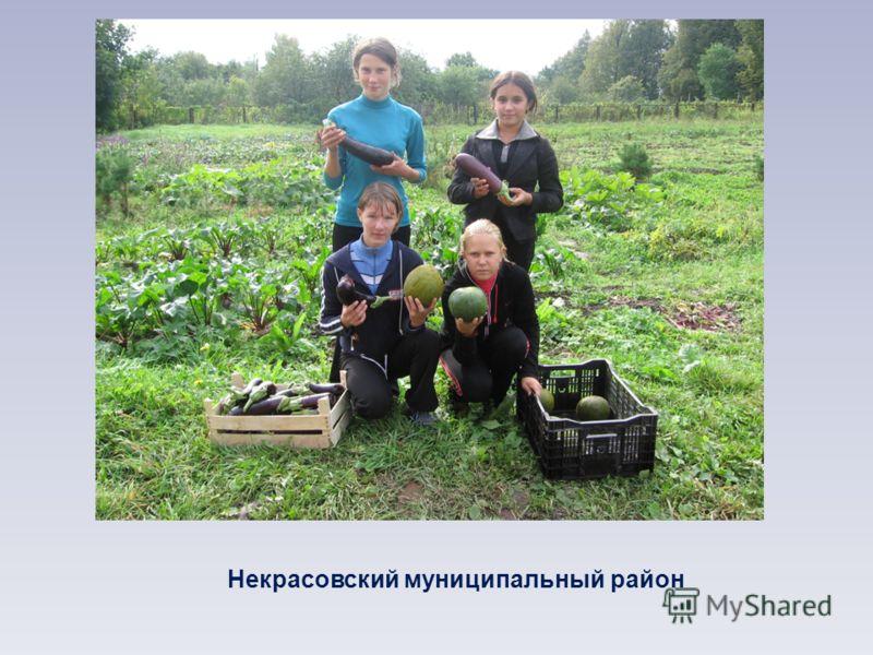 Некрасовский муниципальный район