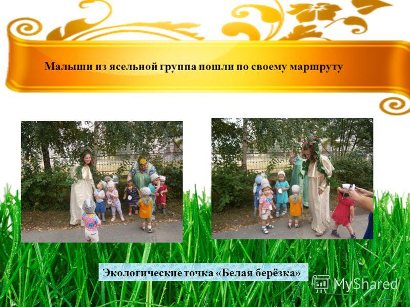 Малыши из ясельной группа пошли по своему маршруту Экологические точка «Белая берёзка»